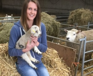 p7 sheep worrying 2